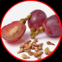ekstrak biji anggur