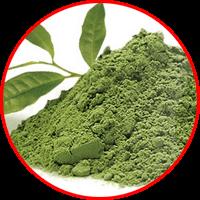 ekstrak teh hijau