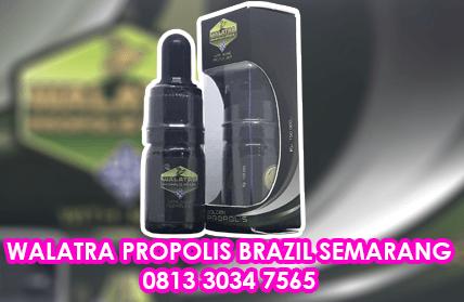 walatra propolis brazil semarang