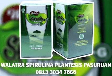 walatra spirulina plantesis di pasuruan